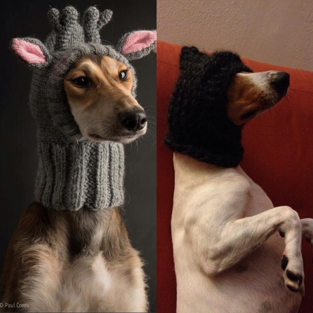tried knitting a hat for my dog 132961 tried knitting a hat for my dog meme guy