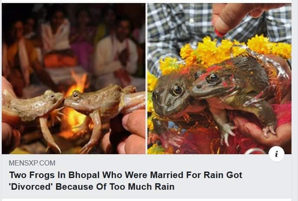 Two frogs in India who were married for rain got divorced because of too much rain