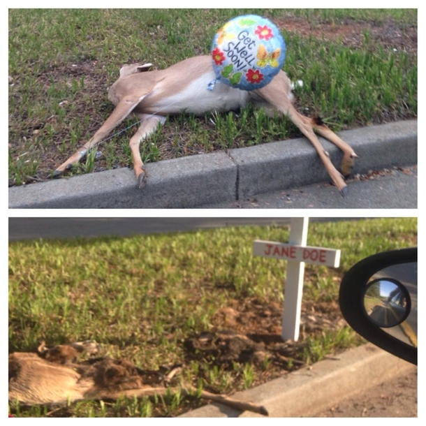 Two weeks later this deer is still on the side of the road and someone has way too much time on their hands
