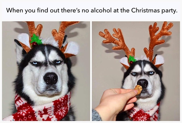 Christmas Party Meme.When You Find Out Theres No Alcohol At The Christmas Party