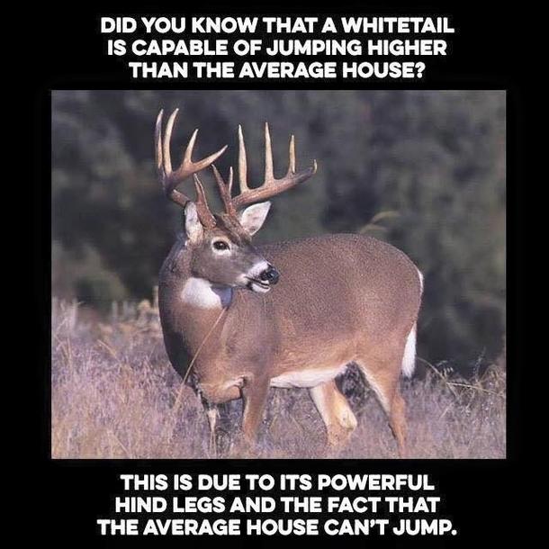 Whitetail Deer Can Jump Meme Guy