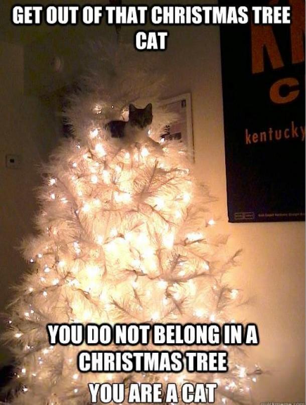 You do not belong in a Christmas Tree - Meme Guy