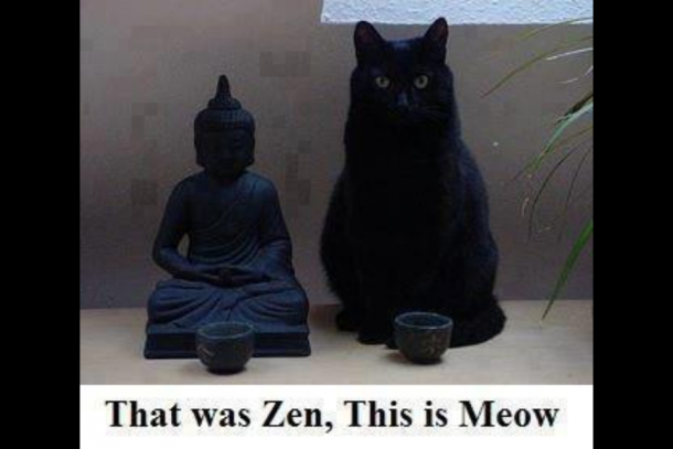 zen-cat-on-enlightenment-7034.png