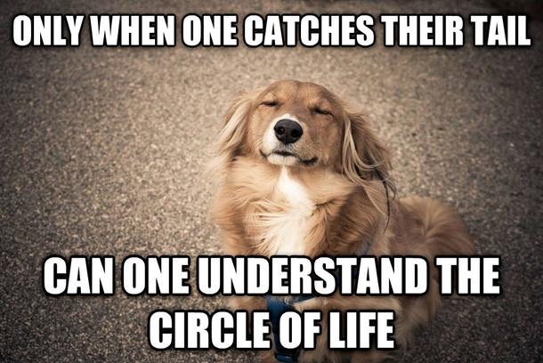 Brown dog face meme - photo#26