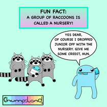 A Fun Fact About Raccoons