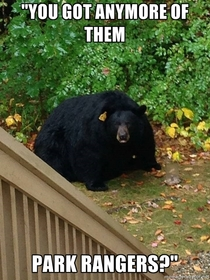 A ridiculously fat bear spotted in Simsbury Ct