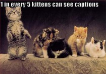 of every  kittens are karma machines