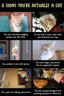 signs youre actually a cat