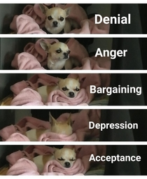 Stages of Grief Hes not happy with me at all