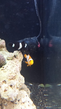 A black short male CLOWNfish we gonna call him Kevin Heart