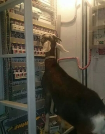 A Comcast field technician hard at work