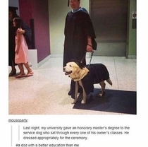A dog with a better education than me