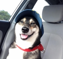 A dog with a hat
