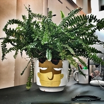 A friend asked me to mind his houseplant for a few days I hope he likes the makeover I gave it