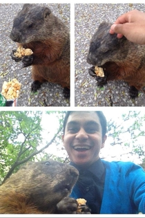 A friend of mine met a hungry groundhog on campus