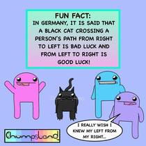 A Fun Fact About Black Cats