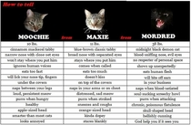 A handy guide my friend made to help houseguests figure out which cat is which
