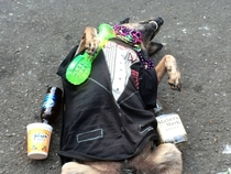 A homeless guy on Bourbon Street trained his dog to play passed out I paid a buck for this photo
