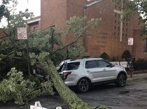 A huge tree fell on this car that was parked illegally in front of a church