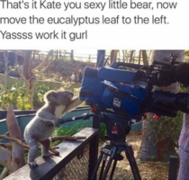 A koalafied director is all you need