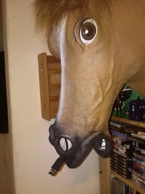A mouse crawled up this horses nose