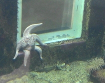 A starfish with problems on his mind