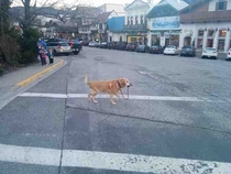 A strong independent dog who dont need no man