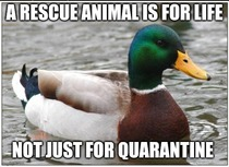 Adopting animals is great but remember this