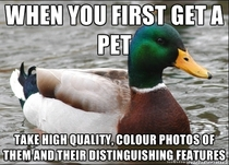 After going through hundreds of grainy unhelpful photos to see if a cat I found was missing I have this bit of advice for pet owners