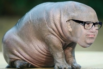 After  minutes in Photoshop I give you the genetic product of Danny DeVito and a baby hippo x-post rPics