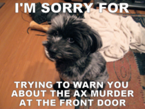 After scolding my puppy for barking at the UPS man Im sure this is how he feels