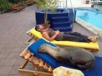 Ahh perfect this sunbed gets my seal of approval