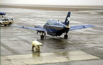Alaska The place where you cant get off the plane because there is a polar bear between you and the terminal