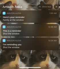 Alexa scared the shit out of me last night Still unsure what she heard there
