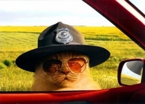 Alright meow Hand over your license and registration