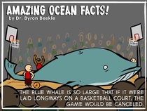 amazing facts about the blue whale