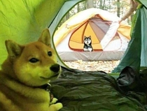 An in tents stare down