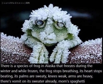 An interesting fact on how this Alaskan frog can survive after being frozen