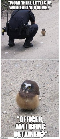 An Owlet Goes For a Stroll