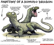 Anatomy of a Komodo Dragon