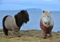 And miniature horse sweaters