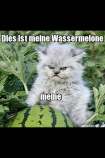 Angry German cat likes his wassermelone