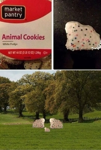 Animal cookies in their natural habitat