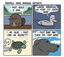 Animals Have Great Instincts