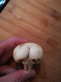 Apparently my mushroom never skips squat day