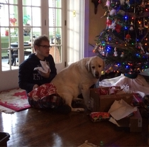 At over  lbs and almost  years old my yellow lab still thinks hes a lap dog This is how I opened presents this morning