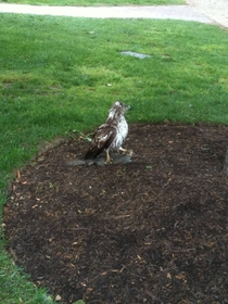 aww this hawk is helping a squirrel stretch