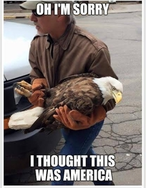 Bald eagle rescued from outside a MN school today