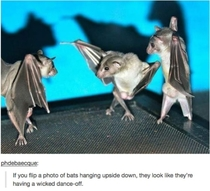 Bat truth