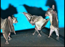 Bats look like they are dance battling when flipped right side up